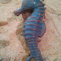 Ceramic Seahorse - Otro Mar Ceramics